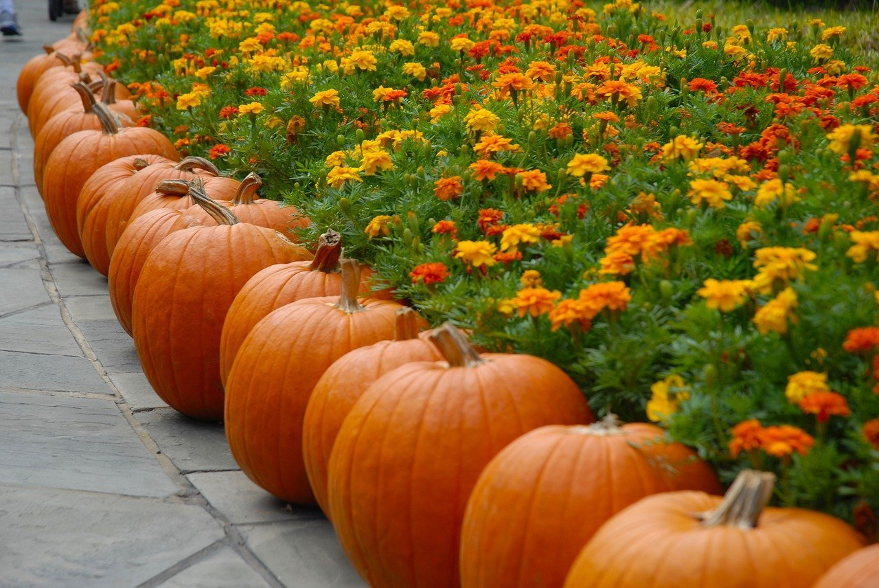 Fall Festivals in New Hampshire